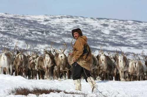 гонками на оленьих упряжках аборигены отметили день оленевода